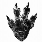 Toho's new Godzilla footprint!